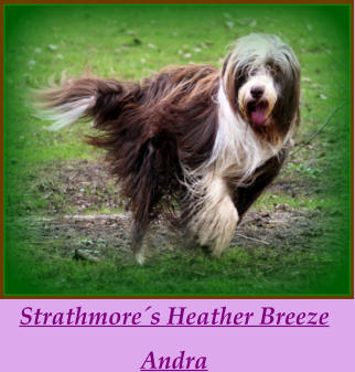 Strathmore´s Heather Breeze  Andra
