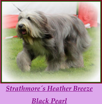 Strathmore´s Heather Breeze  Black Pearl