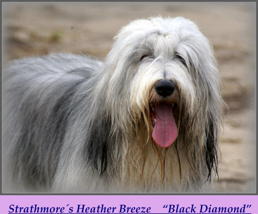 "Strathmore´s Heather Breeze    ""Black Diamond"""