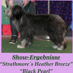 "Show-Ergebnisse ""Strathmore´s Heather Breeze"" ""Black Pearl"""