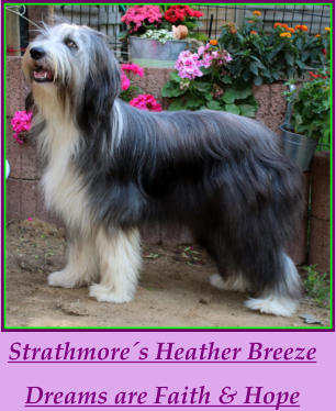 Strathmore´s Heather Breeze Dreams are Faith & Hope